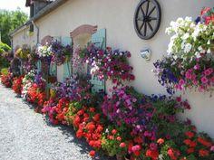 Geraniums and petunias Beautiful Gardens, Beautiful Flowers, Backyard Makeover, Garden Borders, My Secret Garden, Dream Garden, Potted Plants, Backyard Landscaping, Container Gardening