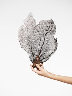 Sea fan from a coral reef. Natural beauty from the sea. Natural World, Under The Sea, Textures Patterns, Style Guides, Wedding Styles, Photography, Beautiful Things, Amazing Things, Beaches