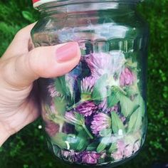 Fiji Water Bottle, Edible Flowers, Organic Beauty, Herb Garden, Healthy Tips, Deodorant, Health And Beauty, Herbalism, Diy And Crafts