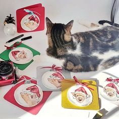 I think I\'d better postpone the intended product photo session of these new hand painted piggy Christmas cards for my onlineshops. The photo station is occupied. . #wandklex #meetthemaker #behindthescenes #atelier #artist #studio #produktfotografie #productphoto #catsofig #dailyinsta #Atelierkatze #pig #pigsofig #schwein #ferkel #christmas #christmascards #Etsy #etsyde #etsyseller