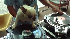 DJ Frenchie! So awesome.