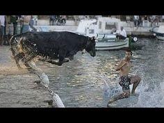 ✦✦✦ পাগলা গরুর কাণ্ড দেখুন!! (Mad Cow Running (Funny) at Dhaka Street- Q...