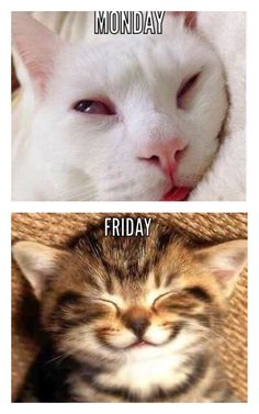 Baseball, Memes, Cats, Animals, Baseball Promposals, Gatos, Animales, Animaux, Kitty