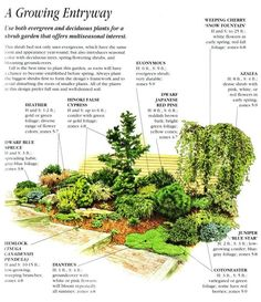 Front Yard Shrub Garden// winter garden interest//dwarf conifer based landscape plan #LandscapeShrubs