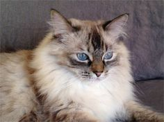 My cat Nyah. Katherine, Los Angeles, CA - 2/18/2015