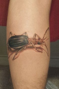 Bugs n butterfly tattoos on pinterest dragonfly tattoo for Best tattoo artist in fort worth