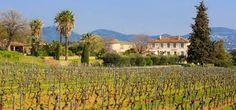 Château Barbeyrolles - Pétale de Rose Vins Saint-Tropez - Presqu'île