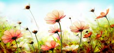 beautiful nature flowers background, Nature, Landscape, Outdoor, Background image