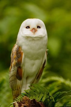 """Land of the Animals — """" By Robert K """" Animals And Pets, Baby Animals, Funny Animals, Cute Animals, Funny Owls, Owl Photos, Owl Pictures, Beautiful Owl, Animals Beautiful"""