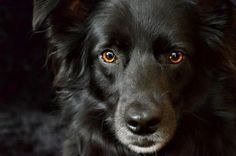 I own a black dog, she happens to be the sweetest out of our dogs. Don't go to the shelter and pass up the black dogs because their not the color you wanted, you could pass up your best friend and not even know it. Black Dog Syndrome, Loyal Dogs, Stop Animal Cruelty, Animal Quotes, Humane Society, Large Dogs, Mans Best Friend, Animal Rescue, Dogs And Puppies
