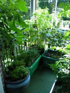 Make your own vegetable garden on your balcony. This article shares some insight about urban gardening, and how you could create a small container garden within a limited space.