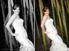 Bridal bamboo in Duke Gardens