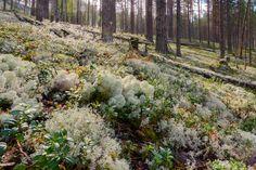Rokua 7.8.2016 -69 Finland, Places, Nature, Inspiration, Biblical Inspiration, Naturaleza, Scenery, Lugares, Inhalation