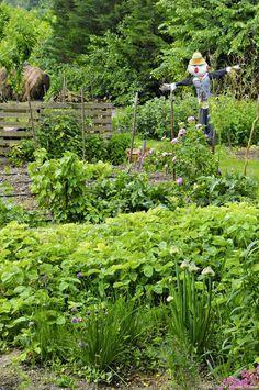 Un jardin potager, bio, bon et durable - Le potager de Sara