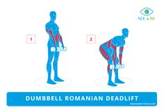 Dumbbell Romanian Deadlift, See & Be Fitness Static Cling Decal.  Muscle groups exercised are highlighted. #fitness #exercise
