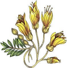 yellow flower Flower Art Images, Design Research, Yellow Flowers, Computer Desks, Thistles, Drawings, Illustration, Nom Nom, Plants