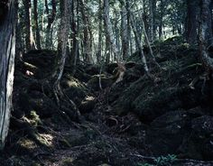Sea of trees by Julia Grassi