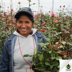 Did you know #FairTrade Certified #flowers ensure safe working conditions, protection from hazardous chemicals, and more? Thank you for choosing socially & environmentally sustainable flowers!