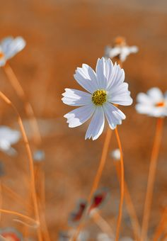 a flower by Enzo Davide on 500px