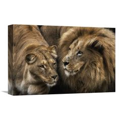 Global Gallery, Pedro Jarque 'Royal Couple' Stretched Canvas Artwork