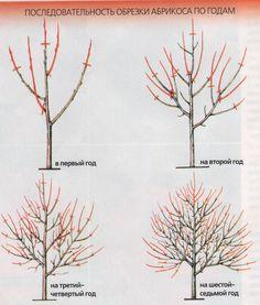 Bonsai Pruning, Tree Pruning, Grafting Plants, Farm Layout, Bonsai Styles, Garden Maintenance, Garden Trees, Trees And Shrubs, Fruit Trees