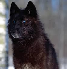 good reads Your Dog is NOT a Wolf