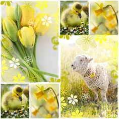 Bij de kleur geel denk ik aan... De Lente. De vrolijke kleur na de donkere koude winterdagen. De natuur in bloei en geboorte van de dieren. Alles lijkt ineens weer tot leven te komen.