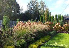 Moja codzienność - ogród Oli - strona 1628 - Forum ogrodnicze - Ogrodowisko
