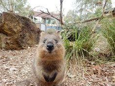 valentine's day taronga zoo