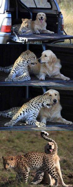 Excelentes momentos de amistades animales