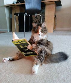 this Pin is all about . a cat reading sartre I Love Cats, Cute Cats, Funny Cats, Funny Animals, Cute Animals, Fun Funny, Crazy Cat Lady, Crazy Cats, Cat Reading
