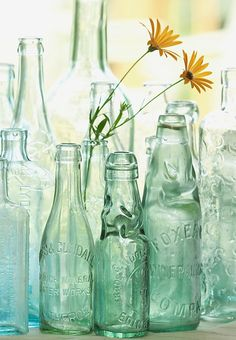AQUA BOTTLES Antique bottles no. old blue green bottles in morning light photo with sea glass colors Antique Bottles, Vintage Bottles, Bottles And Jars, Antique Glass, Glass Jars, Reuse Bottles, Mason Jars, Green Glass Bottles, Empty Bottles