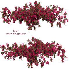 Bougainvillea 02 by BrokenWing3dStock on DeviantArt