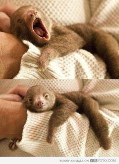 Baby sloth yawn - Cute and funny baby sloth yawning. #cute