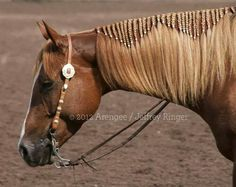 This is a fairly simple but beautiful way of braiding mane, it's probably my favorite too!