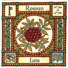 """Rowan, Ogham name Luis, rules 21st January to 17th February and its element is that of Fire. It is also known as """"Quicken Tree"""" ~ the tree of life, in Norse it is called """"Runa"""" meaning rune or charm for magic."""