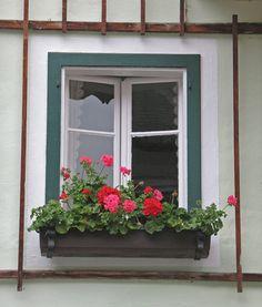 Geranium Window Detail, Hallstatt