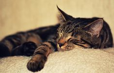 Green Your Life: Green Cat Ownership Dressage, Public Domain, Border Collie, Labrador, Son Chat, Cat Selfie, Healthy Pets, All About Cats, Cat Sleeping