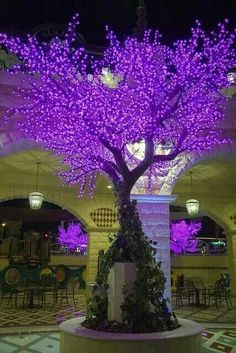 Tivoli Village Las Vegas Lighted Cherry Blossom Trees in purple.