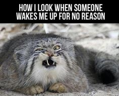How I look when someone wakes me up for no reason!!!! Funny as hell!