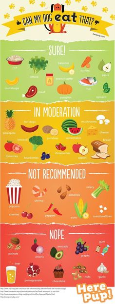 Can My Dog Eat That by herepup #Infographic #Dog_Food
