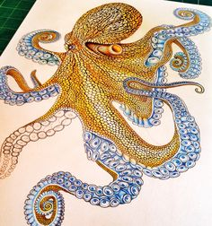 Almost finished with my octopus colored pencil drawing. Prints of my work are available at https://www.etsy.com/shop/timjeffsart