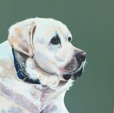 Enzo, yellow labrador in acrylics by Shona Parker