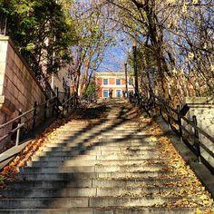 L'escalier de l'avenue du musée - #Montréal
