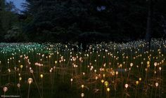 Conceptual Light Gardens By Bruce Munro (8)
