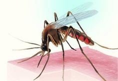 Dengue in heart patients could aggravate cardiac problems  http://www.lordshomoeopathic.com/new-products/dengue-mar-syrup.html