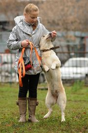 Дрессировка собак и щенков в Москве. Школа дрессировки собак. Спорт с собаками.