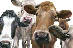 Nosey Parkers, Cow Painting by Wendy Darker Dark Paintings, Animal Paintings, Animal Drawings, Paintings Of Cows, Cow Pictures On Canvas, Cow Mug, Holstein Cows, Canvas Painting Tutorials, Cow Painting