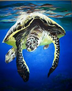 Hawaiian green sea turtle (honu)