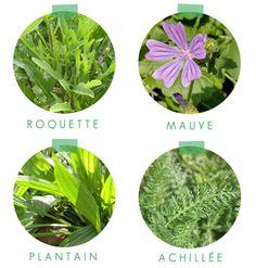 salade de plantes sauvages 2